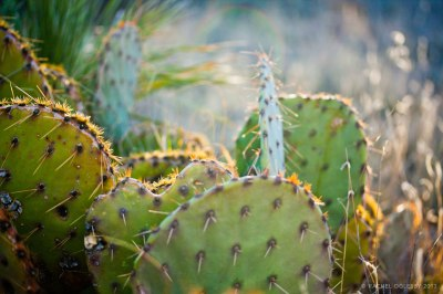 Guadalupe Mountains - El Capitan