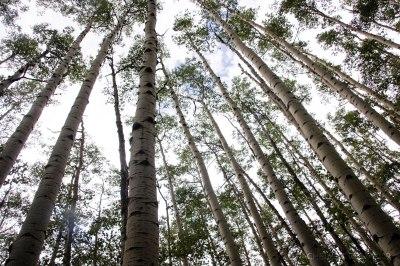 rachel-oglesby-photography-colorado-trail-2009-12
