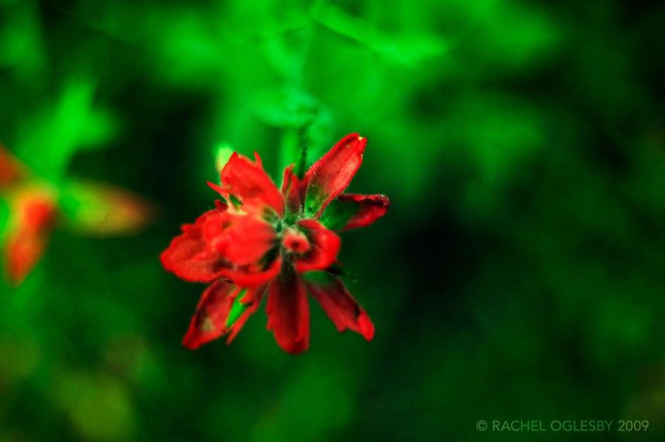 rachel-oglesby-photography-colorado-trail-2009-16