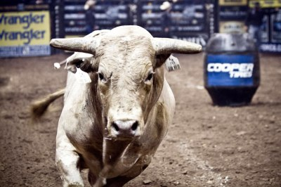 rachel-oglesby-photography-event-pbr-bull-riding-2012-1